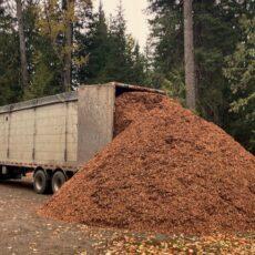 wood chips rocky mountain landscape bark